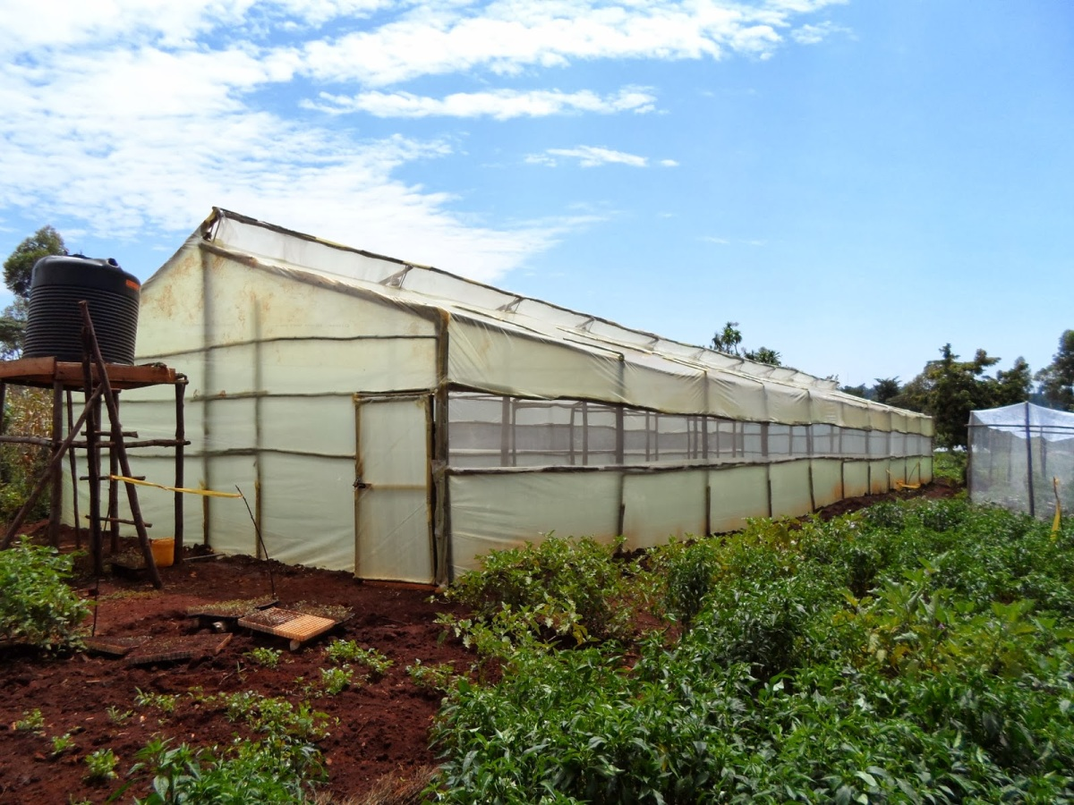 Simple Wooden Greenhouse Kenya